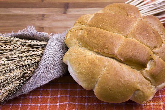 Ceren Tuzsuz Ekmek